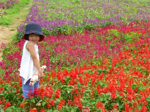 Field of flowers at Daxi